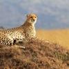 African Safari Holidays