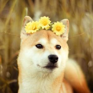 Profile picture for hunde bilder