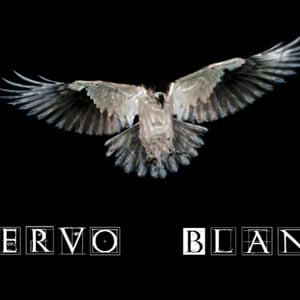 Profile picture for CUERVO BLANCO, PRODUCCIONES.