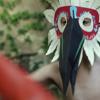LOS PAJAROS . Short Film