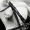 Horse Collaborative