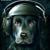 Smart Dogz Prod