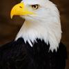 Eagle Eye Vision
