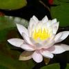 Ku Sharma