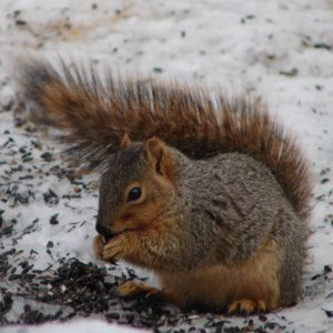 Profile picture for Protect your nuts!