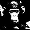 chimpy monkey