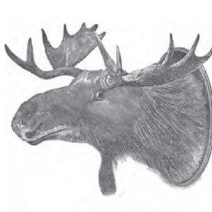 Profile picture for Dan Soucy