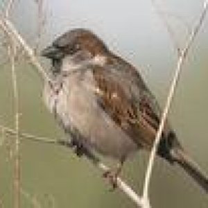 Profile picture for Anon Sparrow