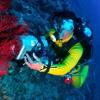 BIDP Bali Diving