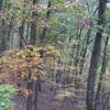 Fall Oak Outdoors