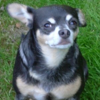 Tiny Dog Pictures