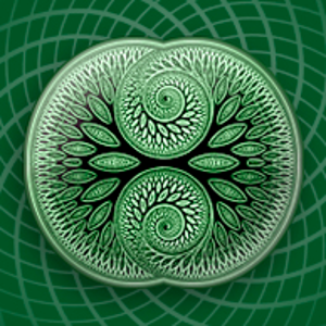 Profile picture for Living Mandala
