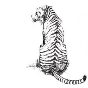 Profile picture for Tigre Pictures