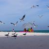OnMedia Creative Gulf Coast
