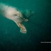 stray seal