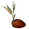 Coconut Information