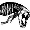 Insectotròpics