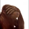 Paul Breitling