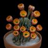 EchinopsisFreak