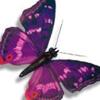 PurpleShades