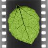 Wild Leaf Reels