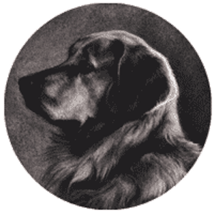 Profile picture for Silent Dog Pictures