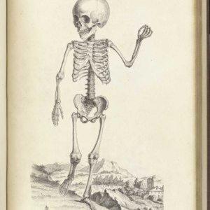 Profile picture for Bones Magazine