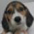 beaglebot