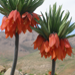 baharhi baharestan