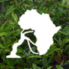 Community Forests International