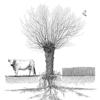 Asso Française Agroforesterie