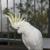 Parrot Nutz