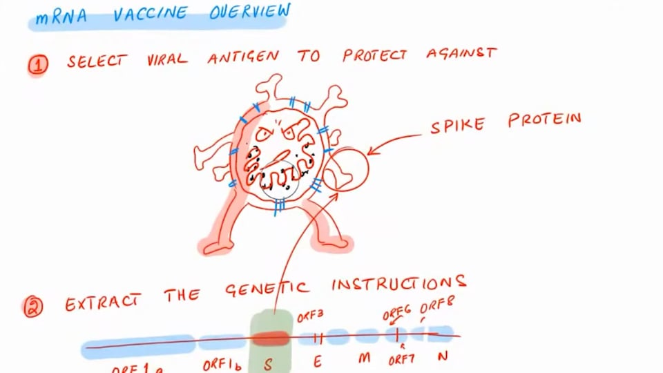 Vaccine Update- BioNTech and Pfizer's Vaccine