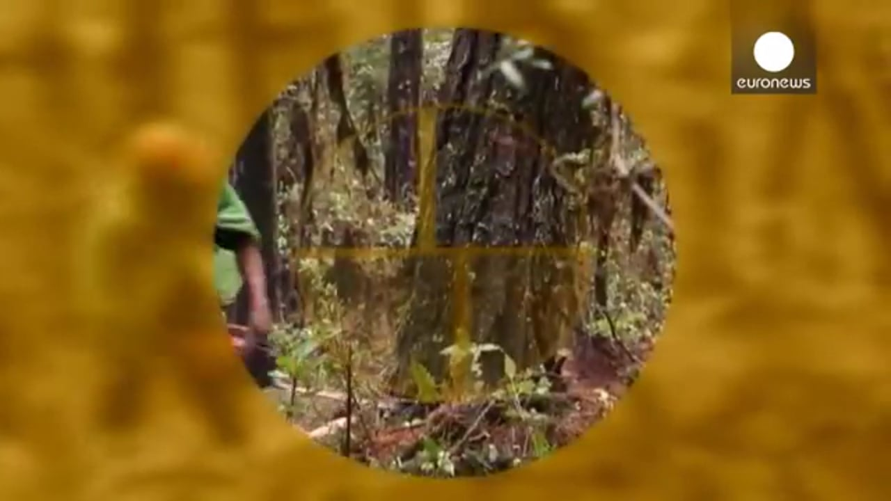 Protecting the forests of Mexico