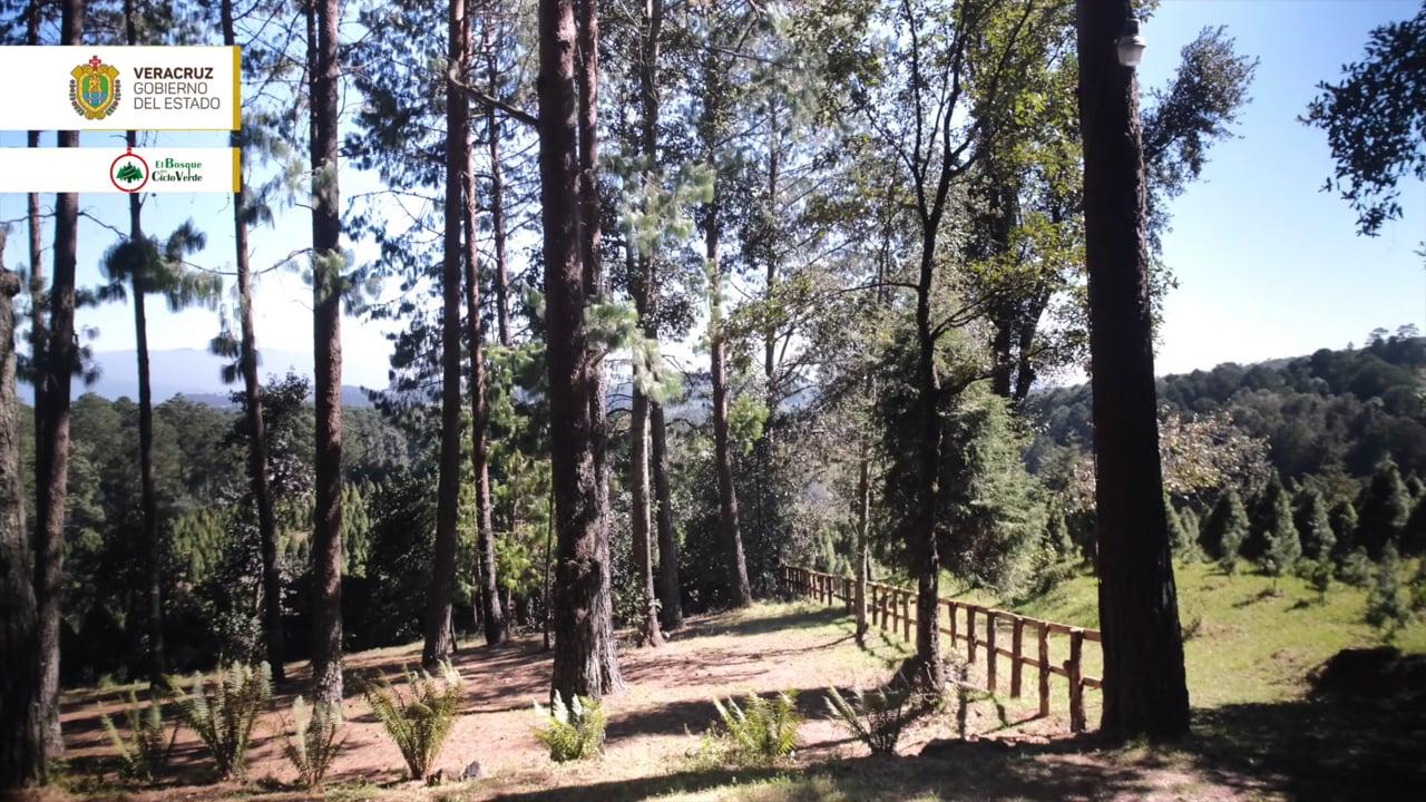 Orgullo Veracruzano: Bosque del Ciclo Verde