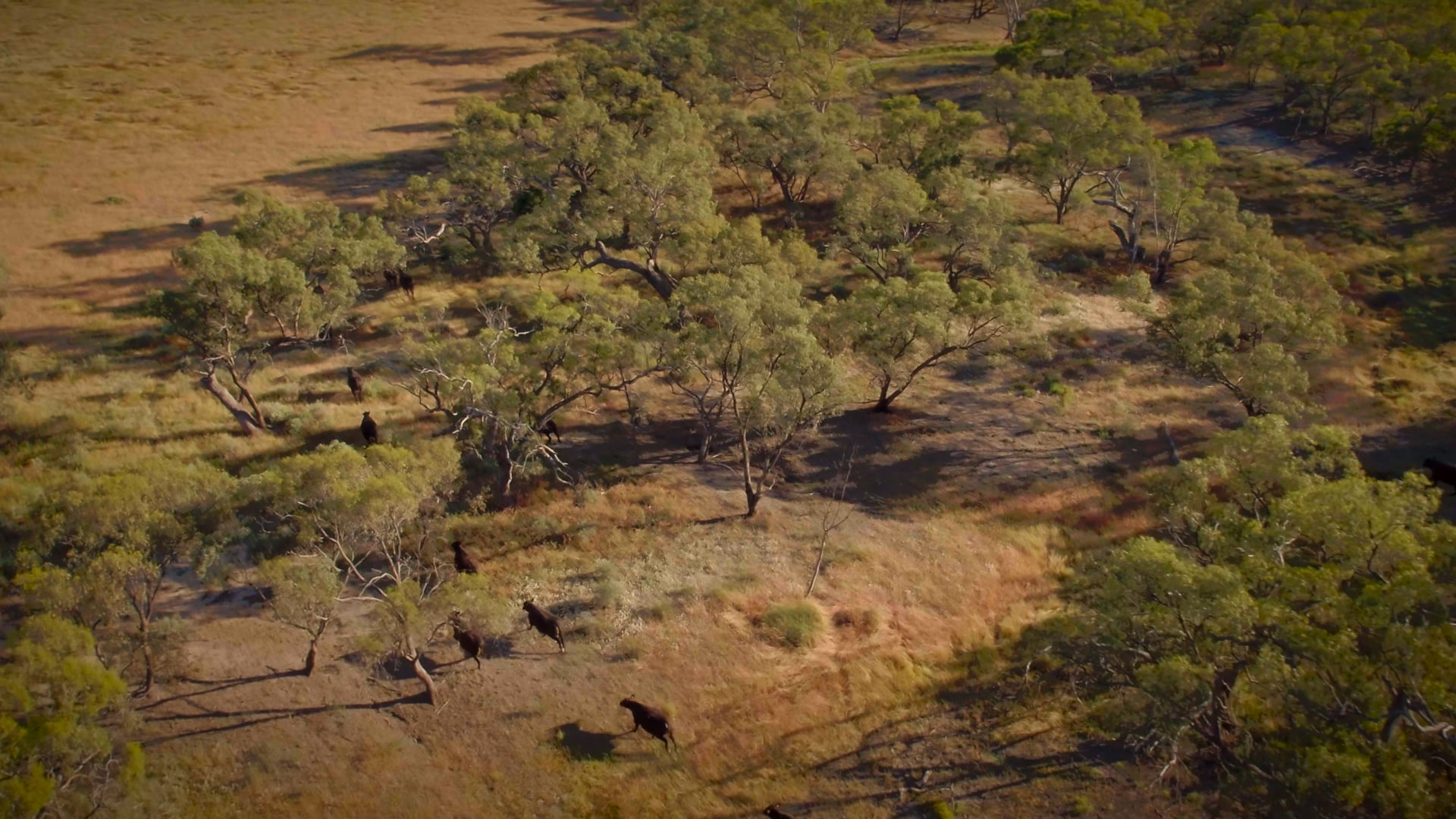 AMG - Australian Meat Group