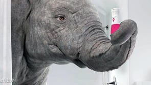 There's an Elephant in the [bath]Room