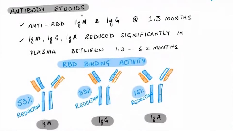 Antibody Immunity Lasts And Matures At 6 Months