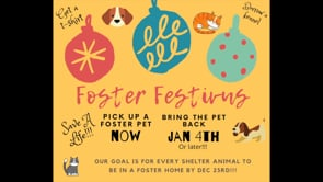 Foster Festivus