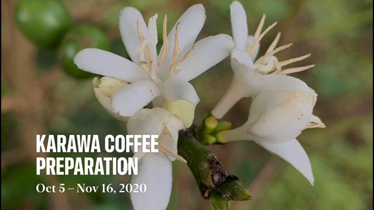 Karawa Coffee Preparation