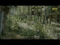 Cidade Viva SLO - filme O Barão de Hirstch e Mulheres de Valor