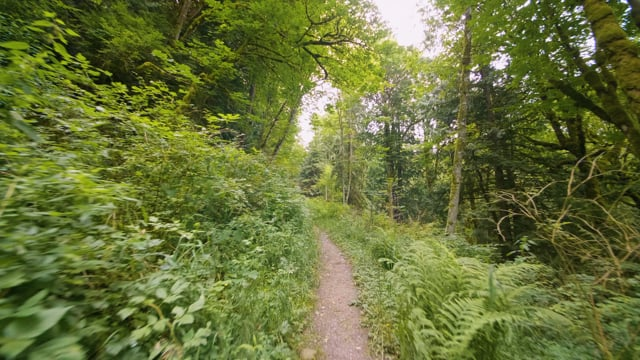 Relaxing Forest Walk, High Point Trail, Issaquah Area - Nature Walking Tour