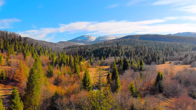 Spring Beauty of the Carpathian Mountains - Short Relax Video
