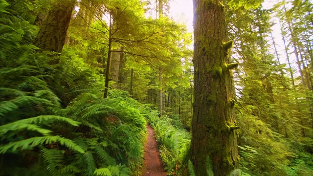 Relaxing Forest Walk, High Point Trail, Issaquah Area