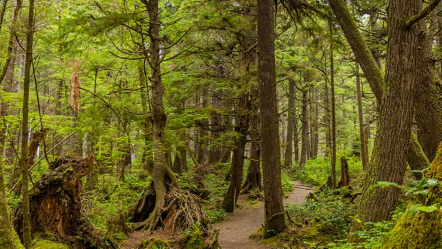 Iverson Railroad and Northwest Timber Trails - Short Relax Video