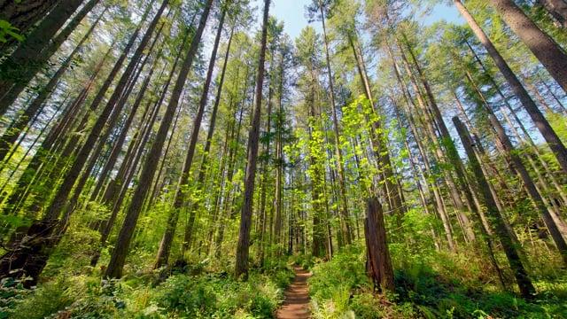 Hiking Around the Lake Trail, Tiger Mountain Area, WA - Virtual Forest Walk