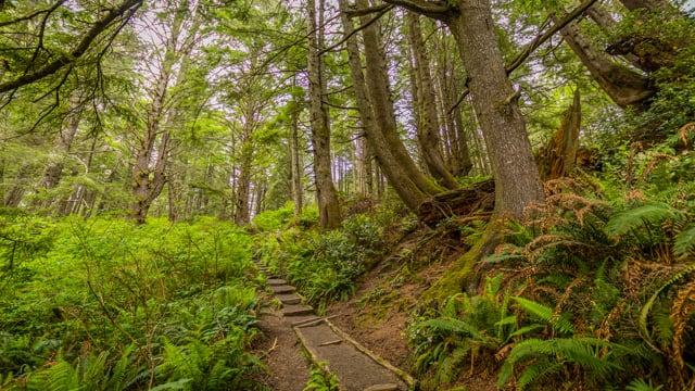 Iverson Railroad and Northwest Timber Trails - Virtual Forest Walk