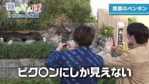【LIONS ONLINE FESTA2020】獅子さんぽ前編!! ライオンズ・金子・源田がサンシャイン水族館へ!! 2020/12/5