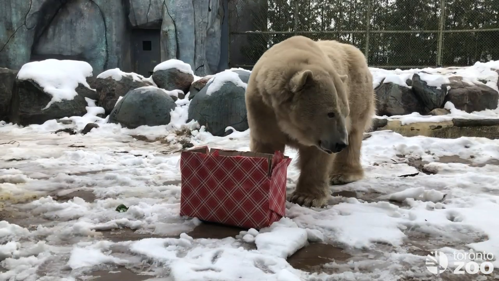 Happy Holidays From Your Toronto Zoo �