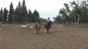 Your New Horse or Colt Part II - Moving Out